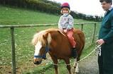 Foel Farm - pony trekking