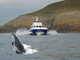 Shearwater Coastal Cruises